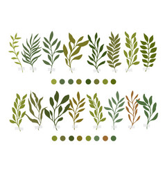 Botanic botanical clipart vector