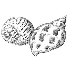 Hand drawing seashell-21 vector