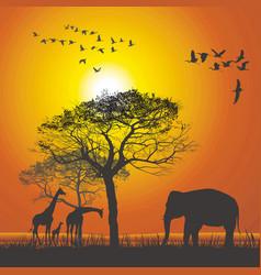 Sunset over the safari vector