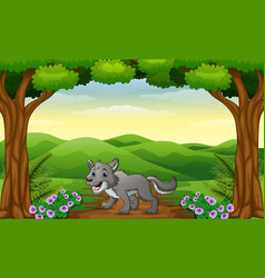 the wolf walking in way of forest hills vector image