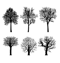 Tree branch arid silhouettes nature forest vector