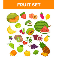 fresh farm fruits and berries isolated vector image