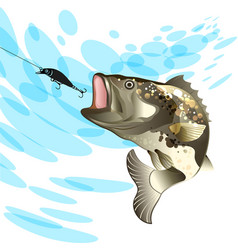 bass fish fishing for perch with a bait vector image