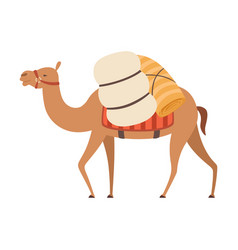 Camel desert animal walking with heavy load side vector