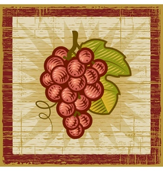 Retro grapes bunch vector image
