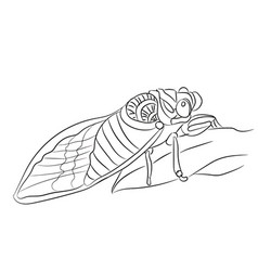 fly graphic line vector image