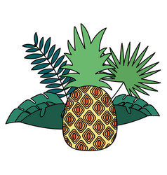 pineapple tropical fruits foliage exotic vector image