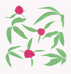 Set beautiful peony leaves and buds in vintage vector