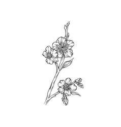 spring flowering branch monochrome floral design vector image