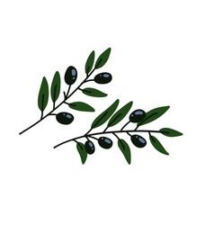two olives branches greek olives branch set vector image