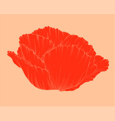 Beautiful red poppy in a hand-drawn graphic style vector