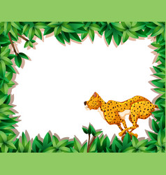 cheetah in nature frame vector image