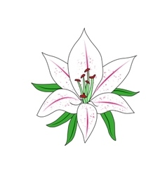 One colored Lily Flower vector image