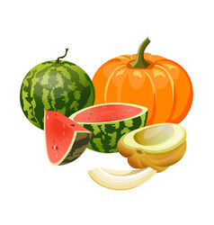 pumpkin melon and watermelon vector image