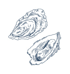 Seafood delicacy bivalve clam oyster sketch poster vector