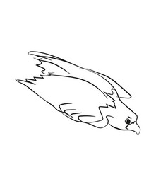 eagle flies graphic line vector image vector image