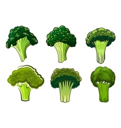 Isolated green ripe broccoli vegetables vector