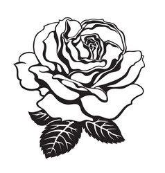 black and white rose icon with leaves hand drawn vector image