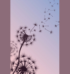 Dandelion with blowing spores abstract vector