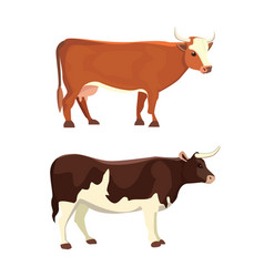 different cows isolated vector image