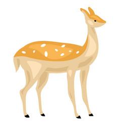 female deer icon cartoon style vector image