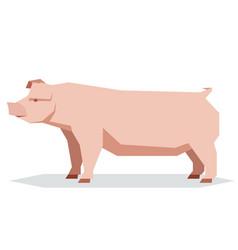 flat geometric chester white pig vector image