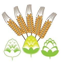 Hop flowers with spikes Beer ingredients vector image