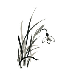 Watercolor snowdrops flower on white vector