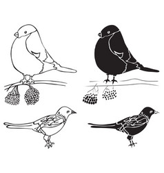 bullfinch and magpie birds vector image