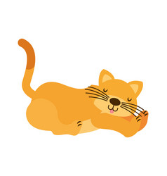 cat cartoon on white background vector image