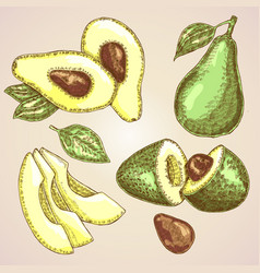 Detailed hand drawn fruit avocado vector