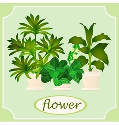 Green flowers in pots Image with space for text vector image
