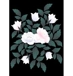 White roses on dark background vector image