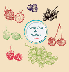 Berry fruit set vector