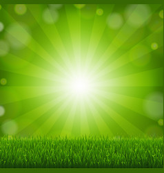 green grass with sunburst background vector image