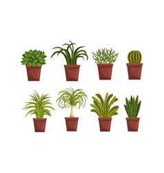house plants in brown flowerpots set home or vector image