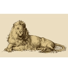 Lion sitting drawing vector