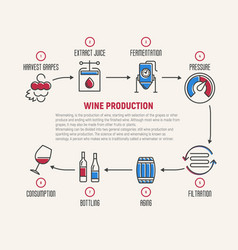thin line infographic of wine fermentation making vector image