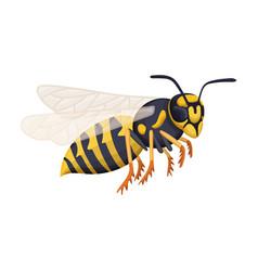 Wasp cartoon icon vector