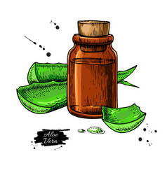 Aloe vera juice in bottle hand drawn vector