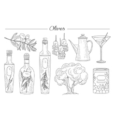 Olive Oil and Branch Handdrawn Set vector image