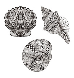 Zentangle stylized set seashells Hand Drawn vector image