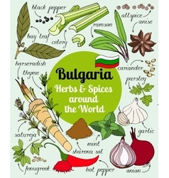 set of Bulgarian herbs and spices vector image vector image