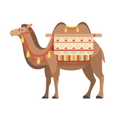Camel two humped desert animal with bridle and vector