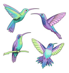 hummingbirds isolated vector image