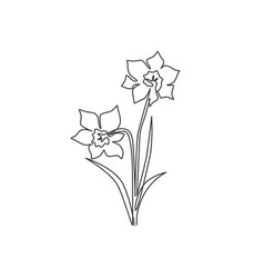 one single line drawing beauty fresh narcissus vector image