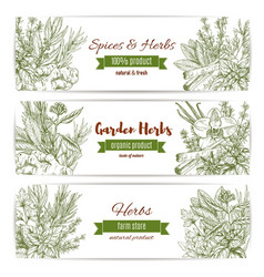 Spices and herbs sketch banners vector