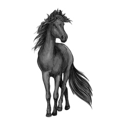 Walking black horse sketch portrait vector