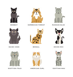 flat domestic breeds of cats vector image