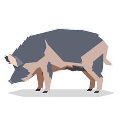 flat geometric ossabaw island pig vector image